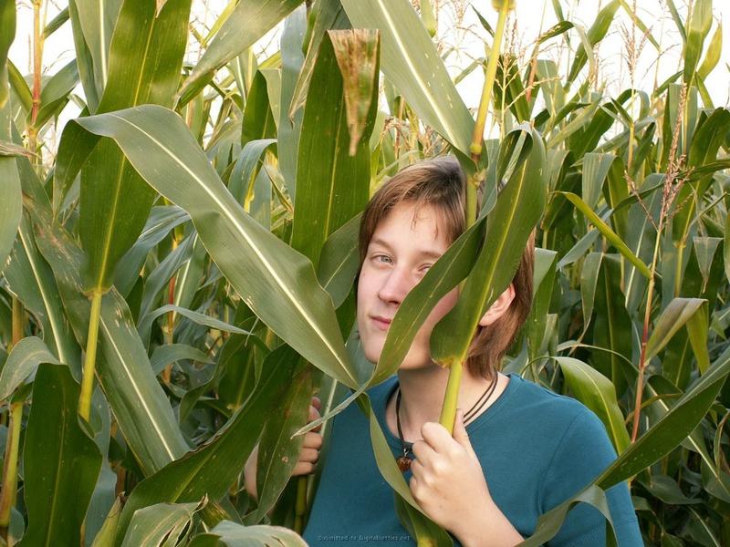 18летная девушка из деревни трахает киску кукурузой в поле 2 фото